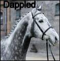 dappled