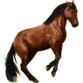 Riding Horse Appaloosa Few Spots
