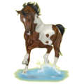 Horse Paint Horse Liver chestnut Tobiano