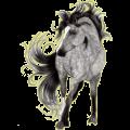 Pegasus Standardbred Cherry bay