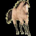Riding Horse Standardbred Bay