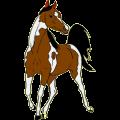 Riding Horse Paint Horse Chestnut Overo