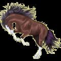 Riding Horse Irish Hunter Dark Bay