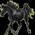 Horse Paint Horse Black Overo