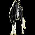Unicorn Paint Horse Palomino Tobiano