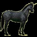 Unicorn Paint Horse Black Tobiano