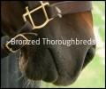 ~bronzed thoroughbreds~