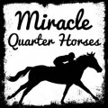 miracle qh's