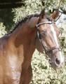 equine sports breeding